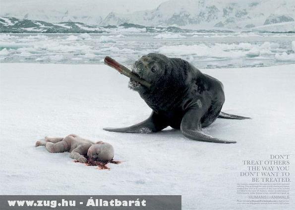 Állatvédelmi kampány
