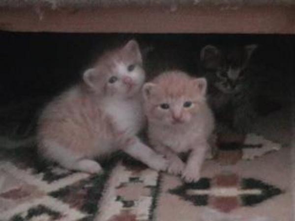 Cicák szeretõ gazdikra várnak