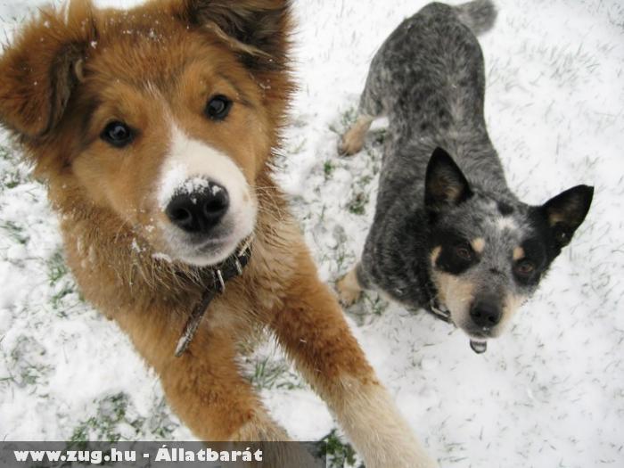 Kutyák a hóban