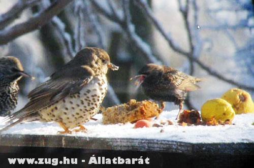 Madár etetés Télen
