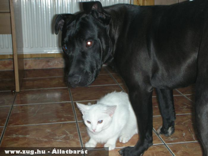 fekete-fehér,igen-nem..