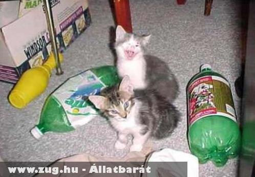 Jókedvû cica