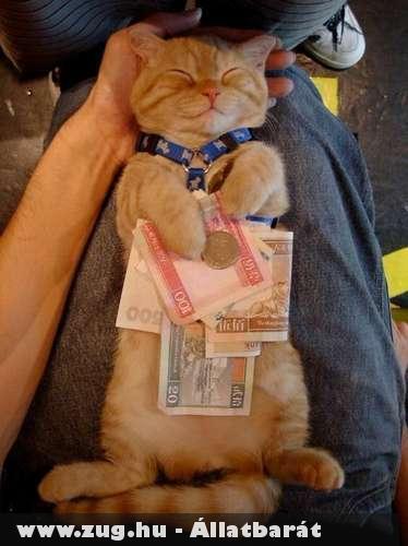 Burzsuj macska