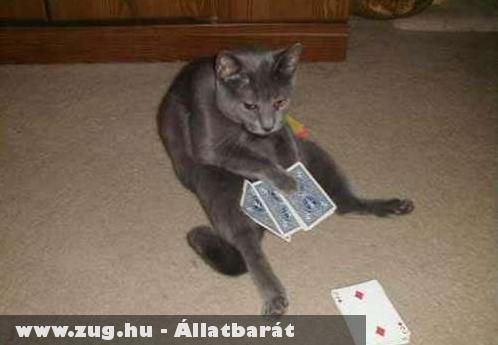Kártyázol velem?