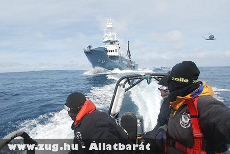 Bálnavadász hajó és az állatvédõk