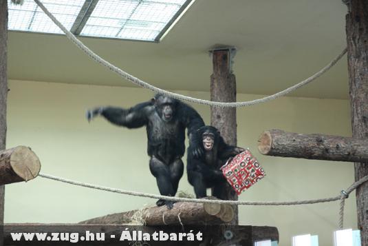 Örülnek, mint majom a...