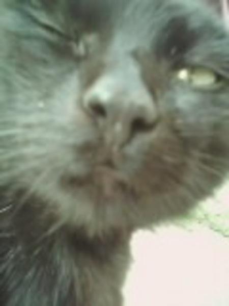 Negro, a kacsintó cica