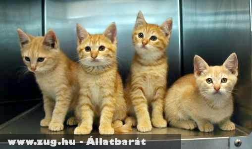 Cicák egy rakáson