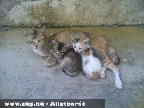 Gazdátlan kóbor macskák