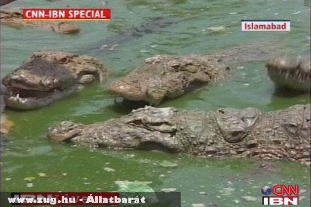 A középsõ krokodil nyelte le a telefont
