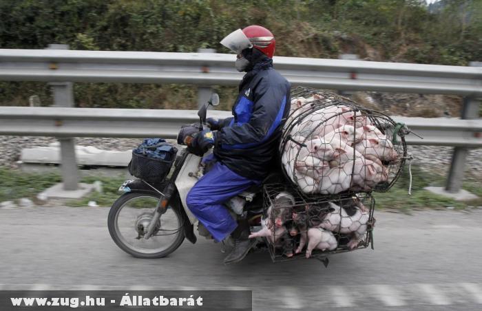 Állatkínzó motoros