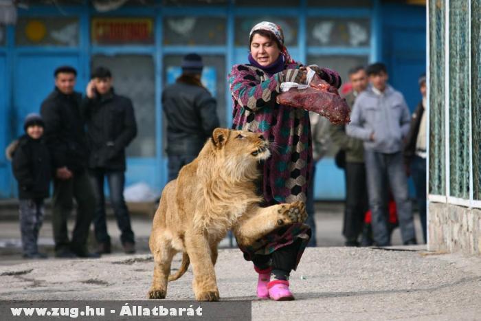 A 18 hónapos Vadik gondozójával sétál a Dushabne-i állatkertben