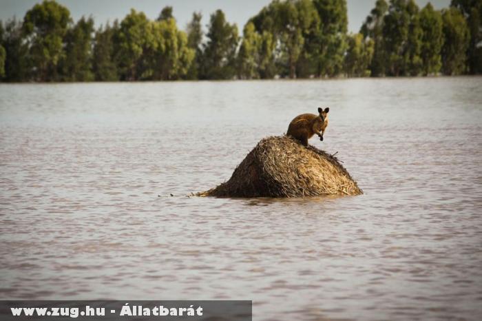 Az ausztrál árvízkatasztrófa egyik áldozata