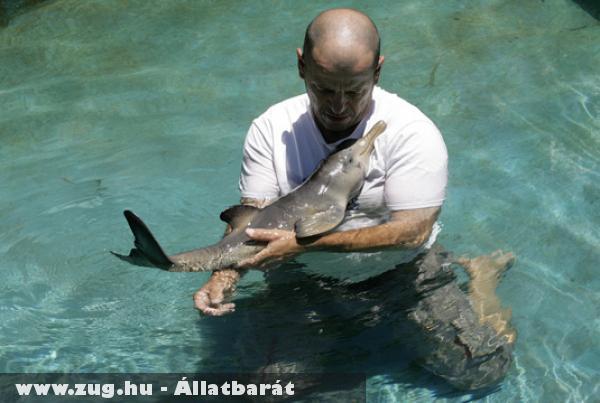 Sérült kisdelfint ápolnak egy uruguayi menhelyen