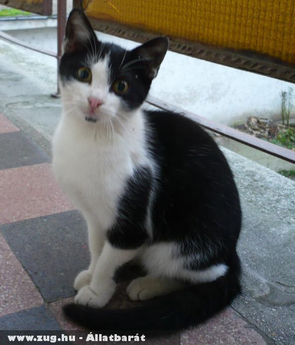 A kis Janka cica