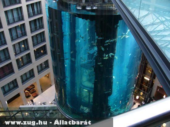 A világ legnagyobb akváriuma