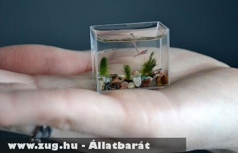 Egy maroknyi akvárium