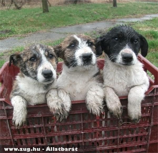 Az elázott, utcára dobott kutyusokat az Orpheus Állatvédõ Egyesület önkéntesei mentették meg