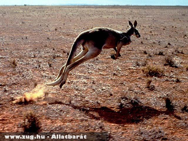 Ausztráliában