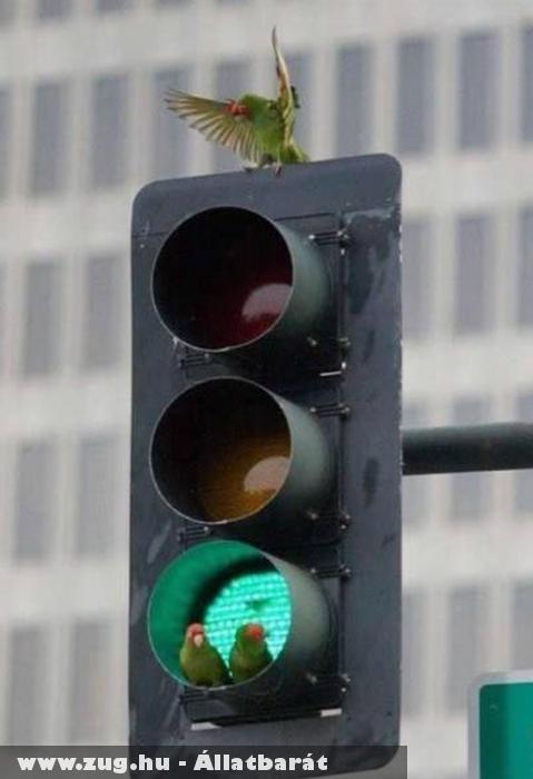 Irányjelzõ papagájok