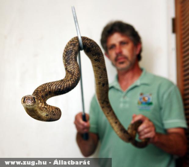 Meg van a bronx-i állatkert szökött kobrája