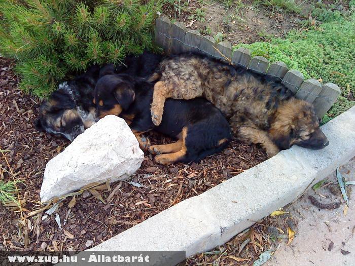 Aranyos keverék kutyák a barátnõmnél