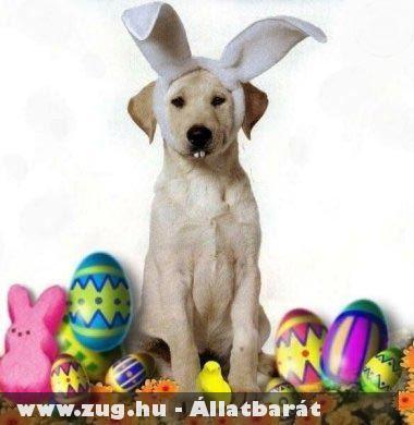 Húsvéti kutya