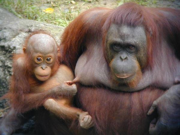 Majombébi és anyuka