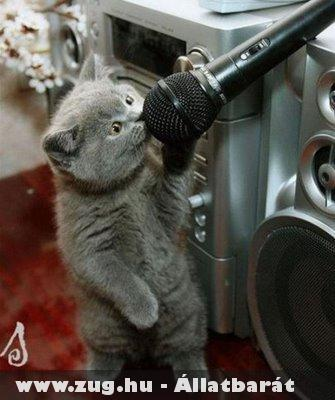 Cica karaoke