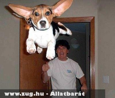 Repülõ kutya!