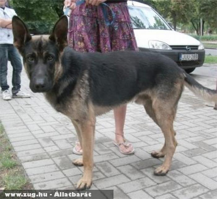 Ramost megmentettük - kutyamentés - orpheus