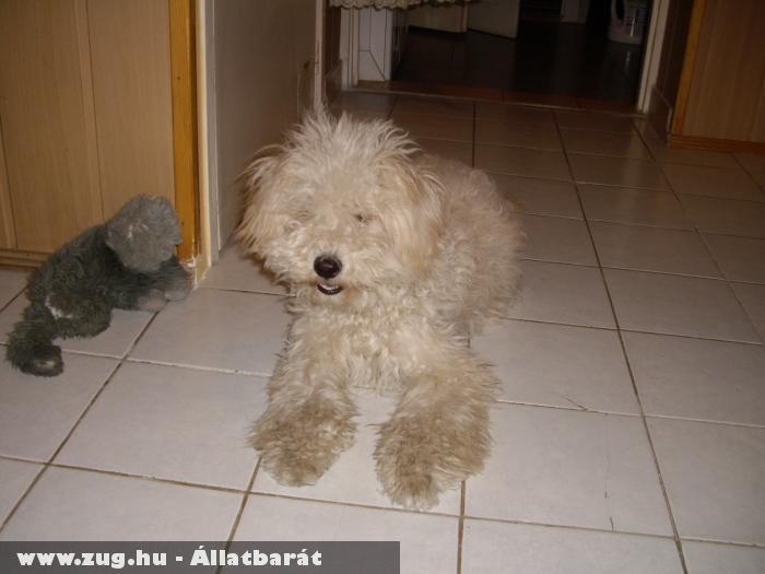 Bödönke kutya