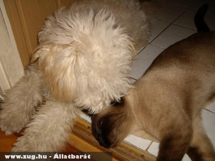 Barátok kutya + cica