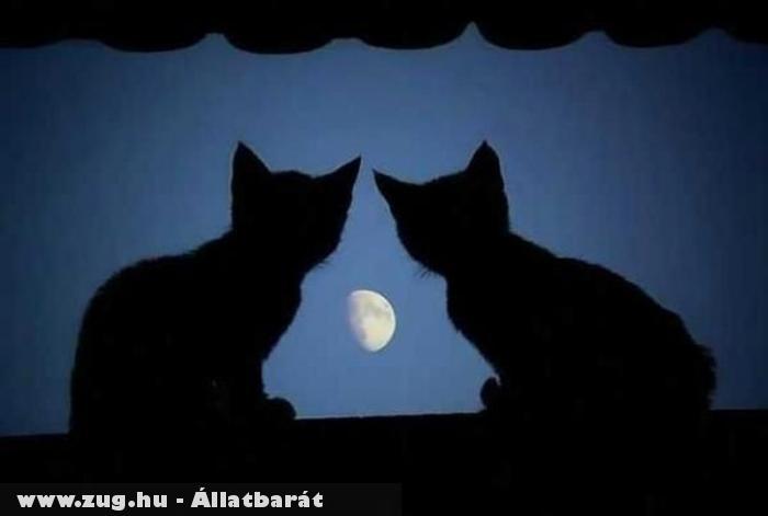 Cicák és a félhold