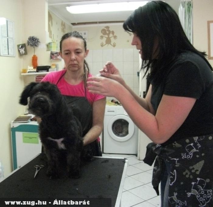Kutyakozmetika - szépül a gazdit keresõ Fidó