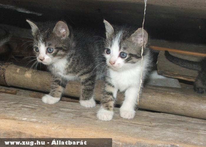 Kicsi cicák