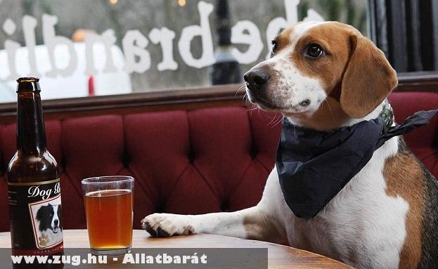 Új ital kutyáknak: Kuyasör