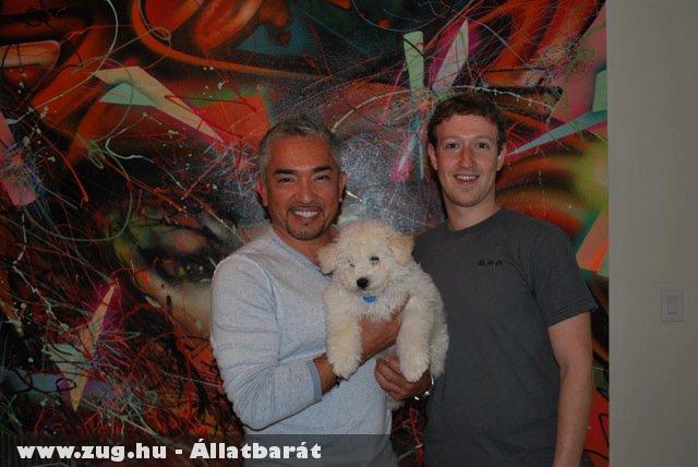 A Facebookos puli