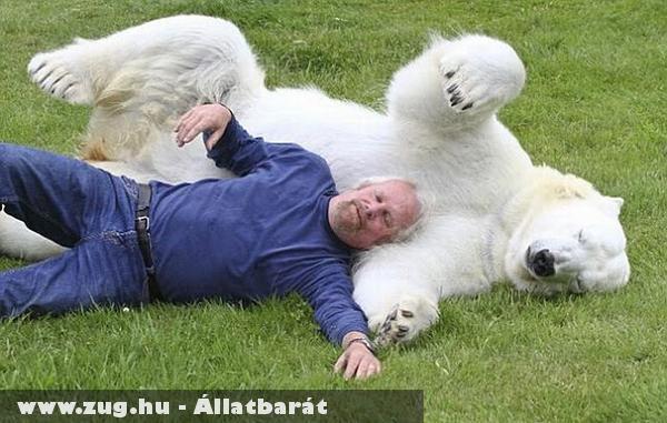 Játékos jegesmedve