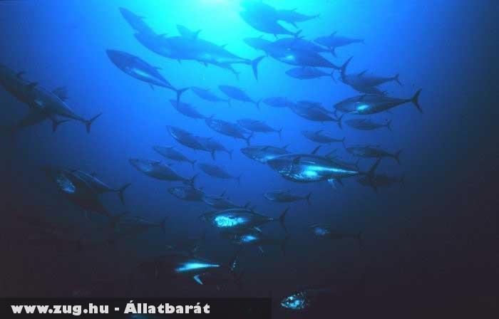 Az óceán mélyén