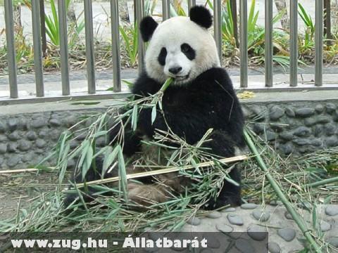 A ZooParc de Beau új lakója