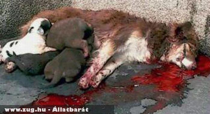 Állatkínzás - tegyünk ellene!!!