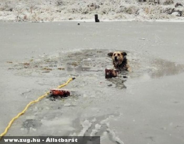 Kutya mentés fagyott tóból