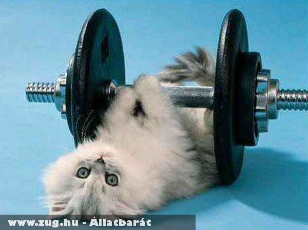 Bodybuilder cat :D
