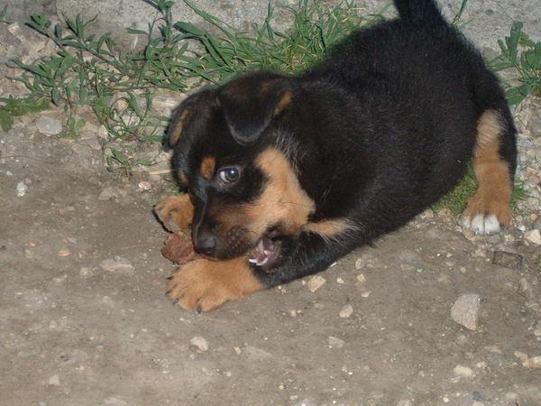 Zuszi kutyusa Rambó