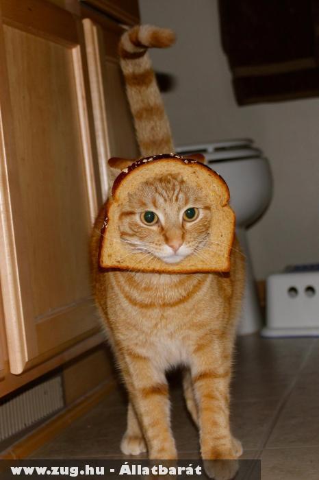 A breadingezés állatkínzás: Kenyérbe dugni a macska fejét?