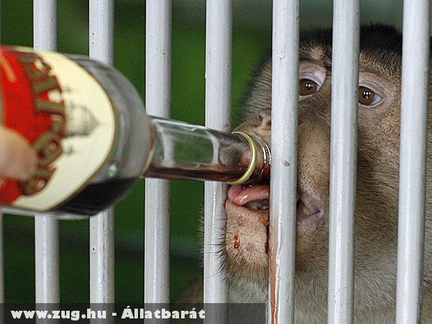 A majmoknak egy Kagor fajtájú vörösborból készítik a téli védõitalt