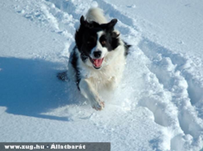 Téli kutyagolás :)