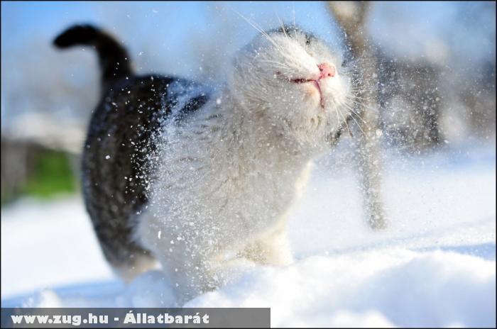 A macska szereti a havat?!