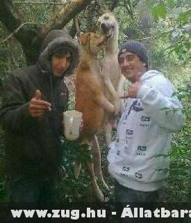 keressük meg ezeket a szemétládákat SOS-be!! Nem lehet tudni még mit tesznek az állatokkal! Ha lehet osszátok meg minden helyen ahol csak tudjátok ezt a fotót!! Köszönöm!!!!!